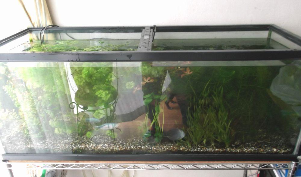 Aquarium1-3