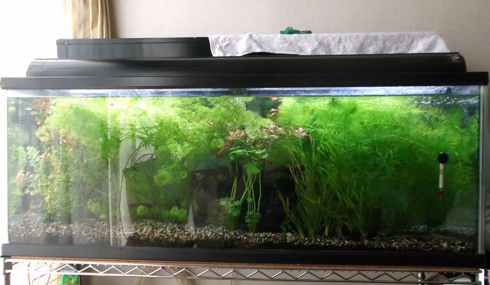 Aquarium1-5