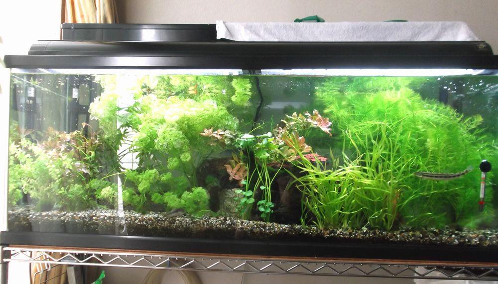 aquarium2-3