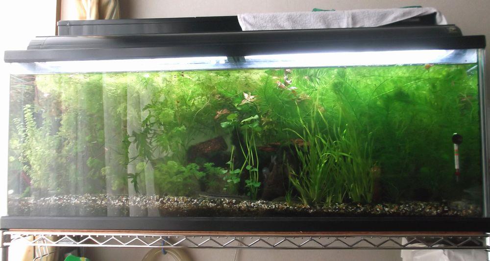 aquarium3-1