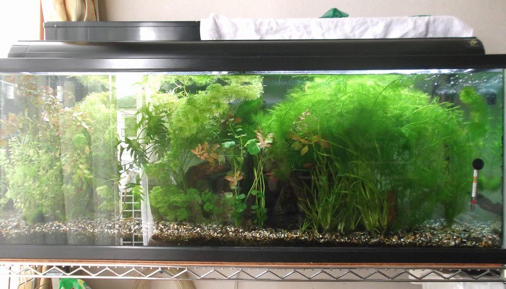 aquarium3-4